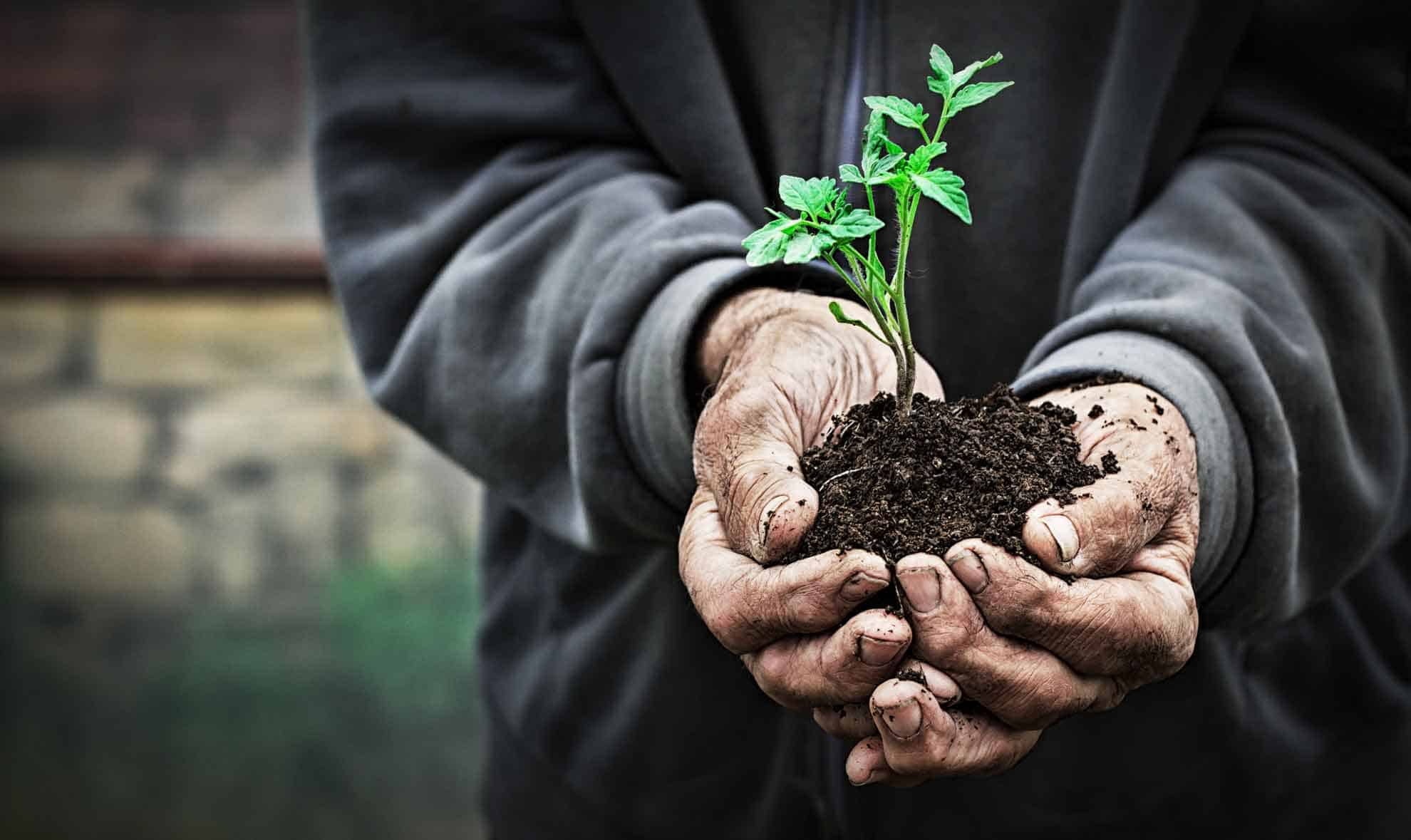 Man holding soil and plant